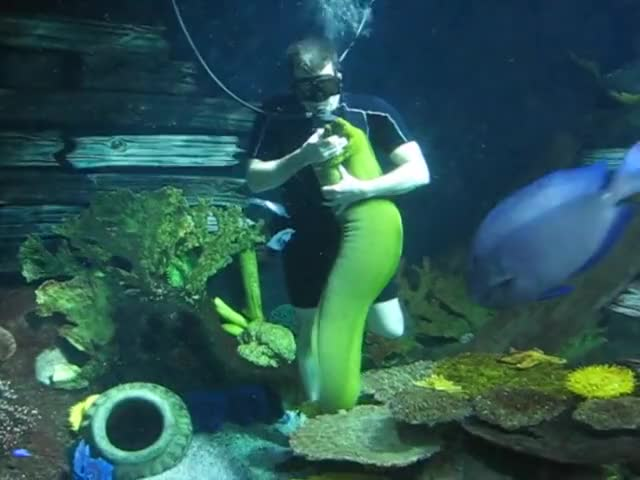 Watch and share Underwater GIFs and Manitoba GIFs on Gfycat