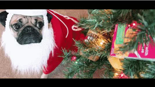 Watch and share 08-Pug-Channels animated stickers on Gfycat