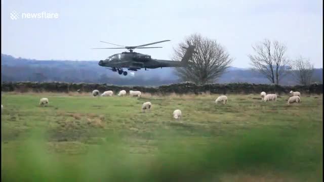 Watch Helicopter sheep herding GIF by @sezar4321 on Gfycat. Discover more helicopter, sheep GIFs on Gfycat