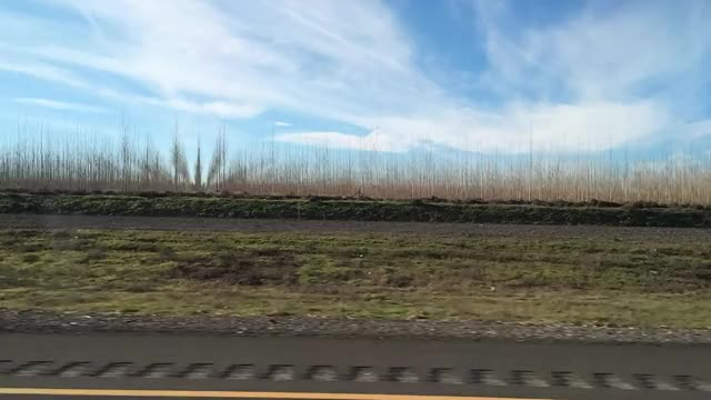 Watch and share Driving Past A Tree Farm GIFs on Gfycat