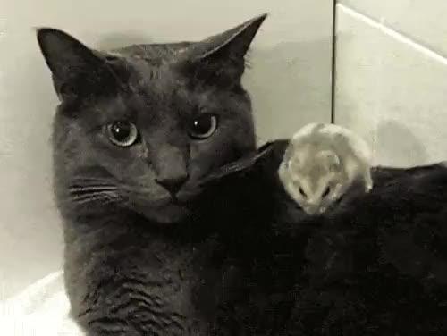 Watch and share Katt GIFs on Gfycat