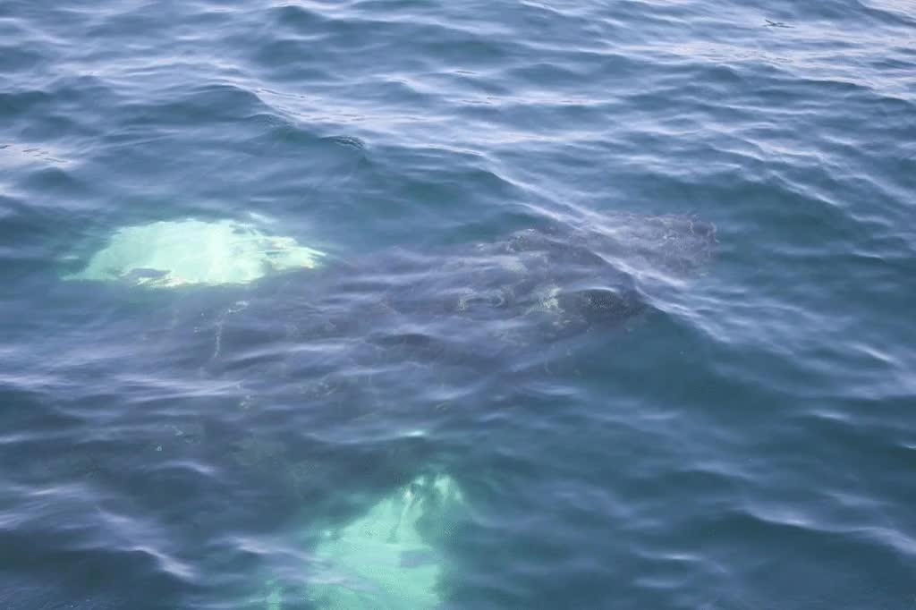 Captain, there be whales here! GIFs