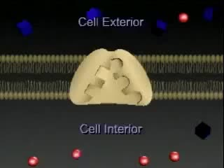 Watch and share Transporte Ativo, Membrana Celular - Cell Membrane, Active Transport GIFs on Gfycat