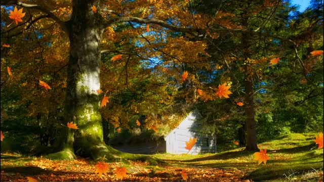 Watch and share Falling Autumn Leaves Background Loops GIFs on Gfycat