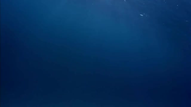 Watch and share Underwater (FREE Video Background 1080p) GIFs on Gfycat