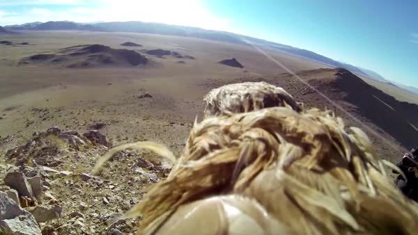 Golden Eagle GoPro GIFs