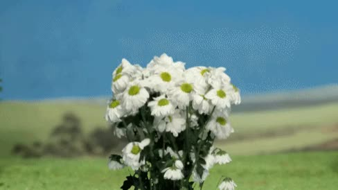 Watch and share Flowers GIFs and Flower GIFs by Reactions on Gfycat