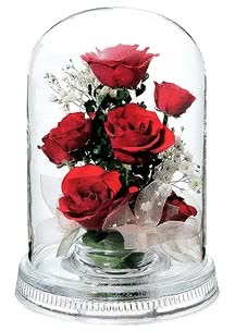 Watch and share Roses animated stickers on Gfycat