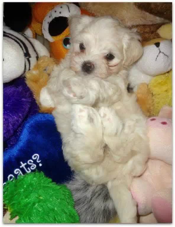 Watch and share Doggo GIFs on Gfycat