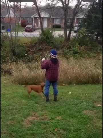 WCGW if you have a overly excited dog GIFs