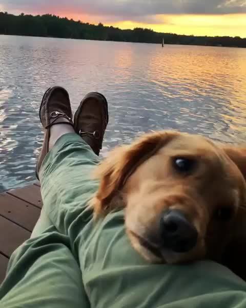 Dog's favorite view GIFs