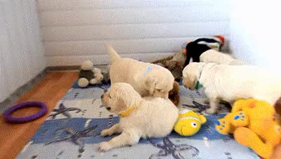 Watch sleepy puppy GIF on Gfycat. Discover more animation, cute puppies, cute puppy, cuteness, dog, dogs, gif, golden retriever, golden retriever puppies, pet blog, petcorner, pets, playing, video link GIFs on Gfycat