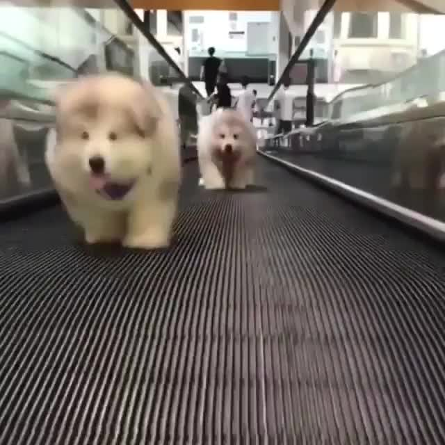 thederpytroller, woof irl GIFs