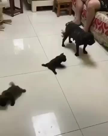 Watch viral viral - Slippery floor race GIF on Gfycat. Discover more viral viral GIFs on Gfycat