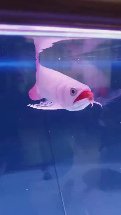 Watch and share Fish GIFs by Ah Negão on Gfycat