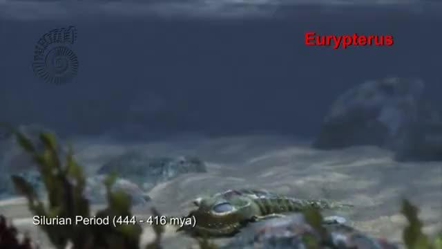 Watch Paleozoo: Eurypterus GIF on Gfycat. Discover more 3D, 3Danimation, Eurypterus, ExtinctAnimal, ExtinctAnimals, MarineAnimal, MarineAnimals, Oceans, Paleozoo, PrehistoricAnimals, animal, animation, bio, gif, marine, marinelife, ocean, profile, sea, silurian GIFs on Gfycat