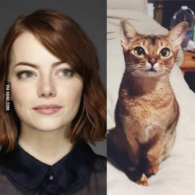 Watch and share Emmastone GIFs and Lalaland GIFs on Gfycat