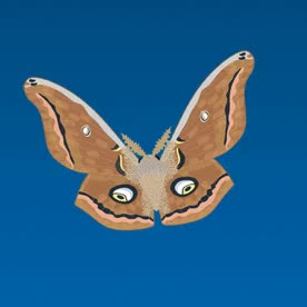 Watch and share Animated Gif - Polyphemus Moth GIFs on Gfycat