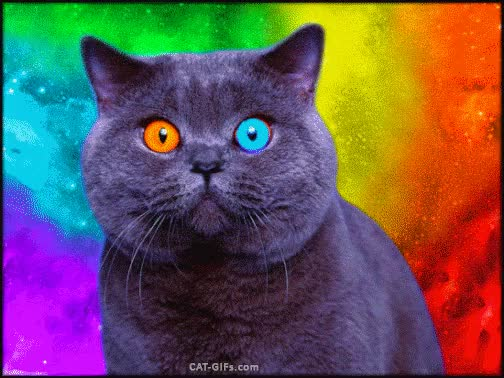 Watch and share ARTistic CAT GIF • Psychedelic Blue Cat With Multicolored Eyes GIFs on Gfycat