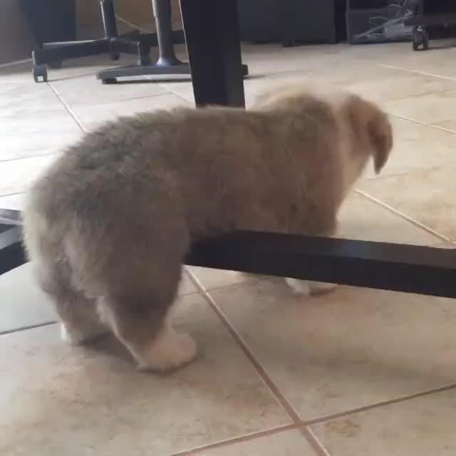 aww, puppy, Facebook video #516890048514703 GIFs