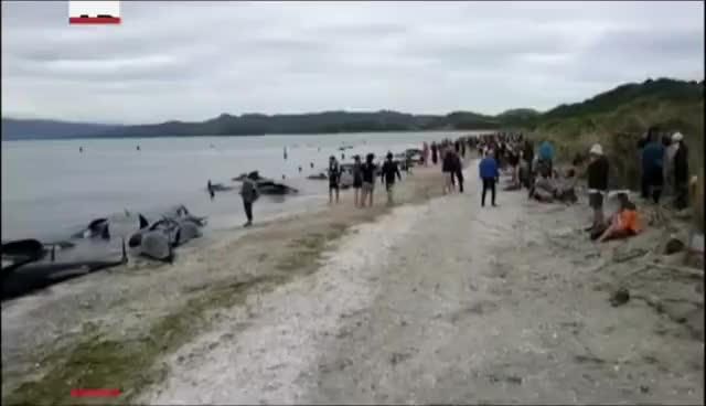 Stranded Whales GIFs