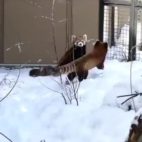 Hunting The Wild, hunting, hunting_the_wild, Buddies playing in the snow GIFs