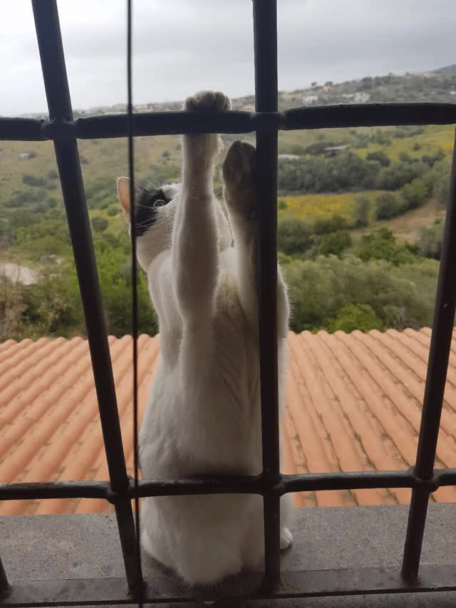 Watch Cat fooling at my window GIF on Gfycat. Discover more animalgifs, aww_gifs GIFs on Gfycat