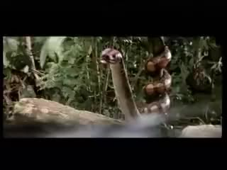Watch Animatronic monkey, bear, alligator, and a lion GIF on Gfycat. Discover more related GIFs on Gfycat