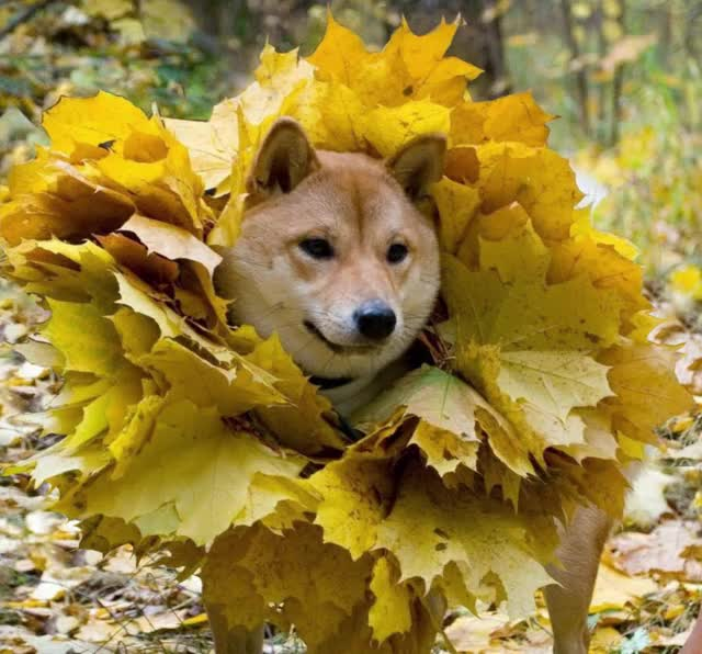 Watch and share Doge GIFs by jnoble50 on Gfycat