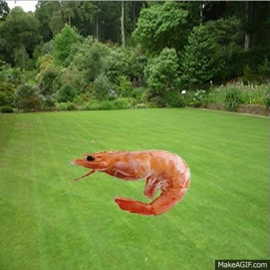 Watch and share Hardcore Prawn Lawn #2 GIFs on Gfycat