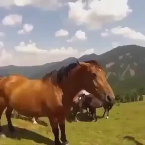 Watch Pet this horse..WCGW? GIF by LimeLights  (@makeagiffoundation) on Gfycat. Discover more related GIFs on Gfycat