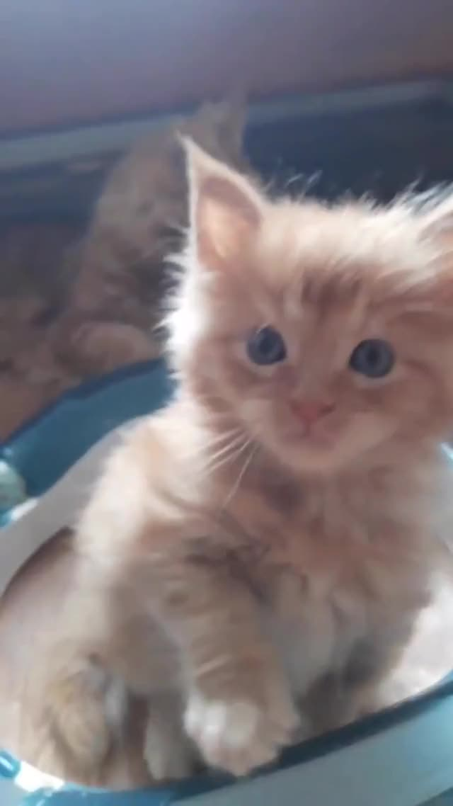 Watch and share Cute Kitten GIFs by Fomicheva1979 on Gfycat