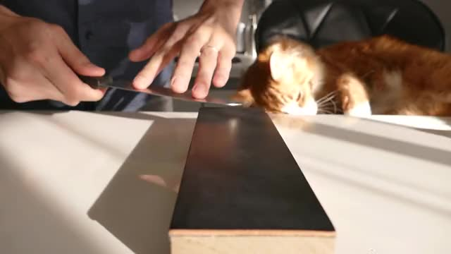 Watch Sharpening a $1 knife GIF by I Made A Knife! (@imadeaknife) on Gfycat. Discover more cat, cook, jun GIFs on Gfycat