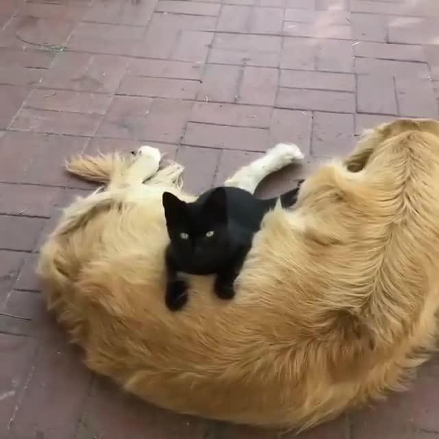 cat, cats_of_instagram, catsofinstagram, catstagram, catvideo, gatos, kitten, kucing, meow, purr, Barkalounger GIFs