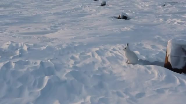 Watch and share Nunavut GIFs and Arctic GIFs on Gfycat