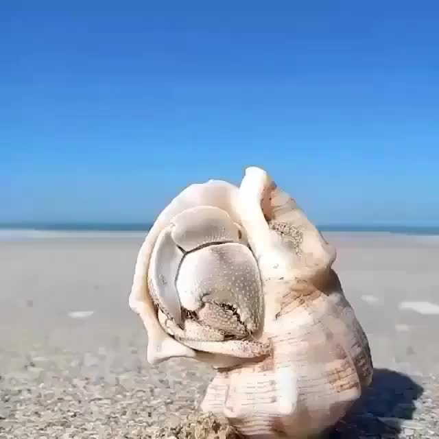 Watch and share Nature GIFs and Crab GIFs on Gfycat