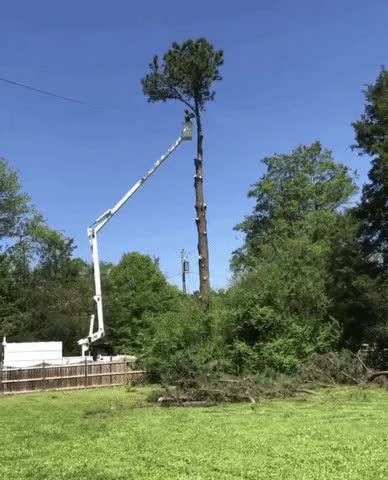 Watch and share Smart Tree Removal GIFs on Gfycat