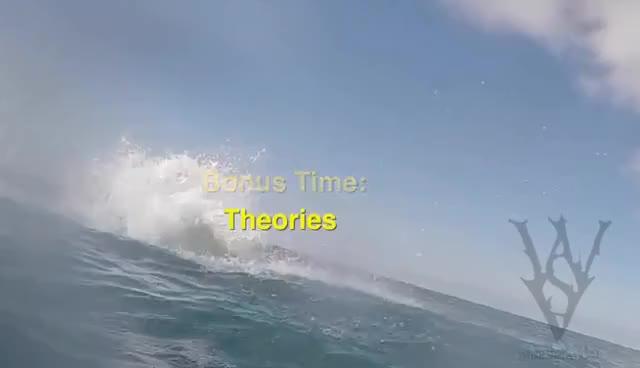 Watch and share Salto Incrível De Tubarão Branco Na África Do Sul GIFs on Gfycat