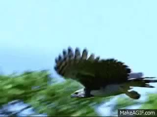 Watch and share Eagle GIFs on Gfycat