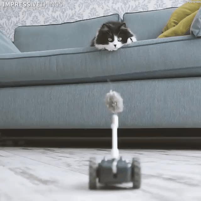 cats, cute, cats GIFs