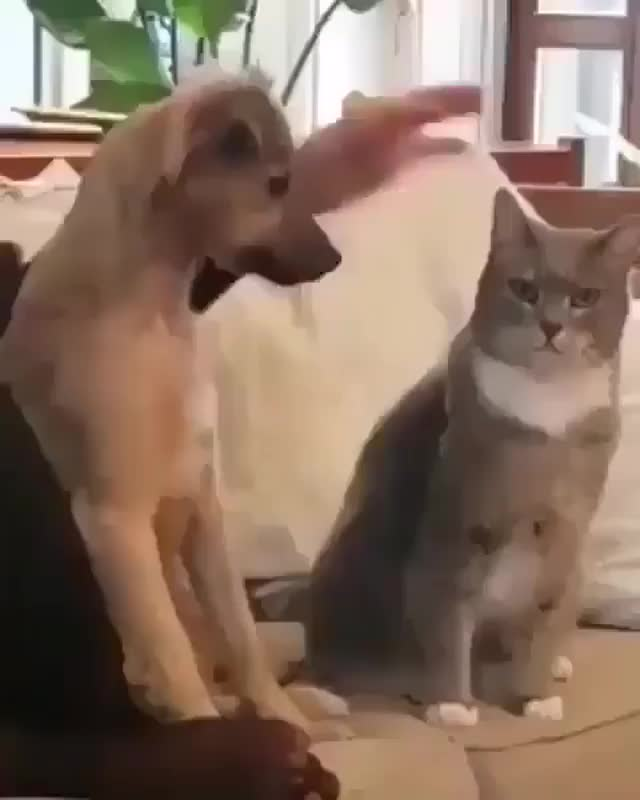 Watch and share Petting GIFs and Cat GIFs by funnyvidspage on Gfycat