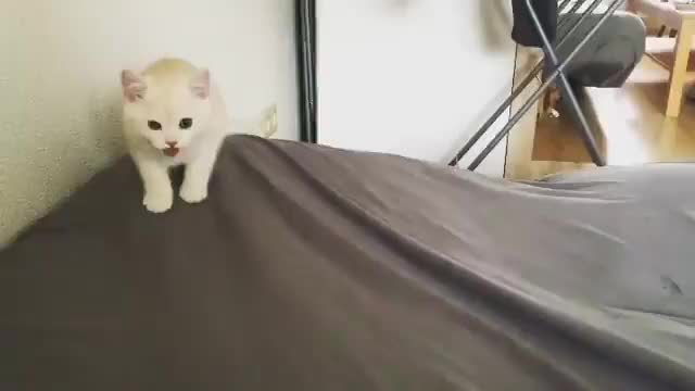 Watch /r/CatsBeingCats - from benji__the_cat GIF by @cakejerry on Gfycat. Discover more related GIFs on Gfycat