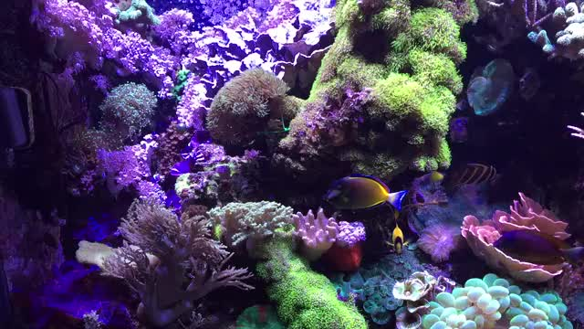 Watch and share Aquariums GIFs and Reeftank GIFs on Gfycat