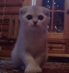 cat, cute, gfycatdepot, kitten,  GIFs