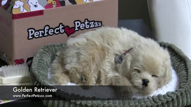 Watch and share Retriever GIFs and Perfect GIFs on Gfycat
