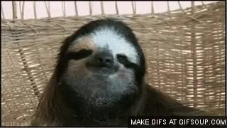 Watch and share How About No Sloth GIFs on Gfycat