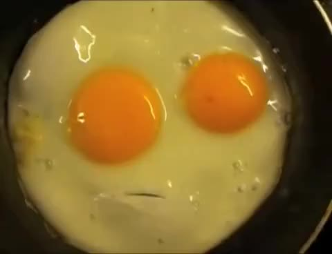 Watch Talking Egg GIF on Gfycat. Discover more Egg, Talking GIFs on Gfycat