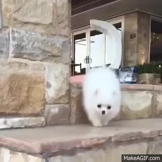 Watch and share Cute Dog Falling In Slow Motion GIFs on Gfycat