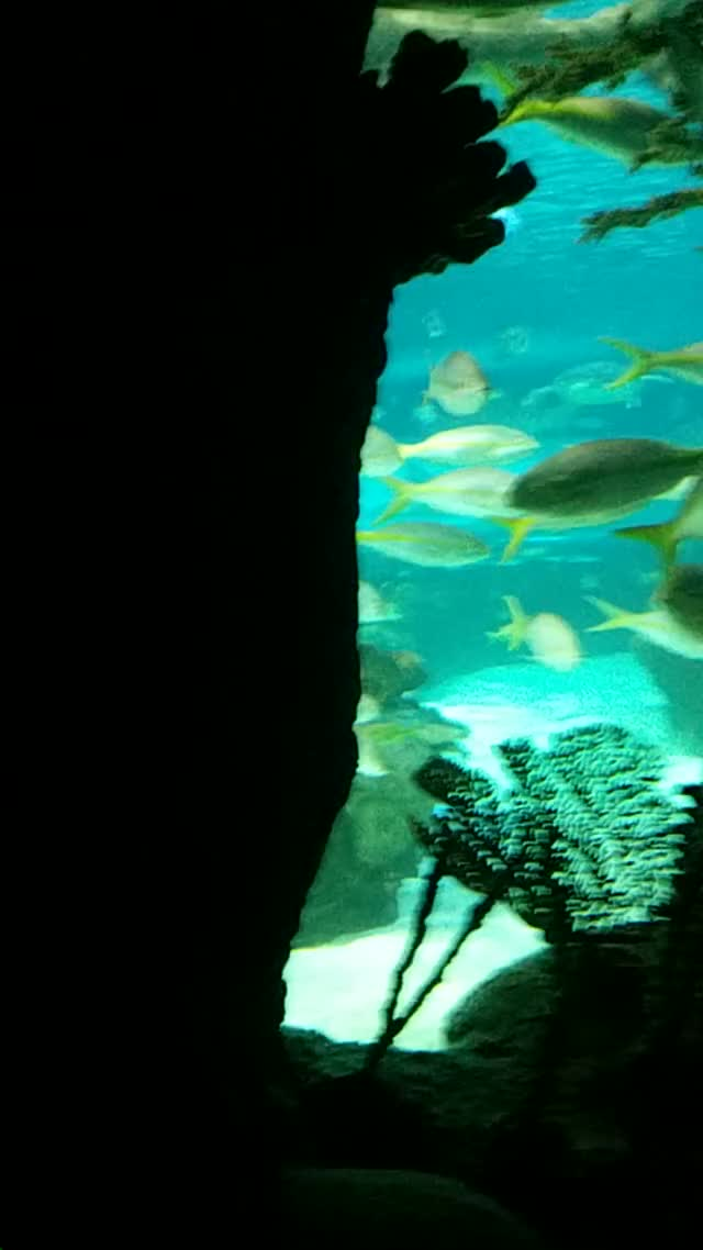 Watch Ripley Aquarium GIF by @theqwert on Gfycat. Discover more aquarium evenorth toronto GIFs on Gfycat