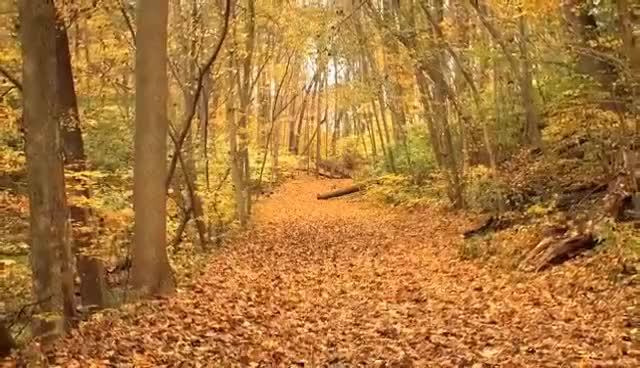 Watch and share Autumn Leaves Falling From Trees HD 1080p GIFs on Gfycat